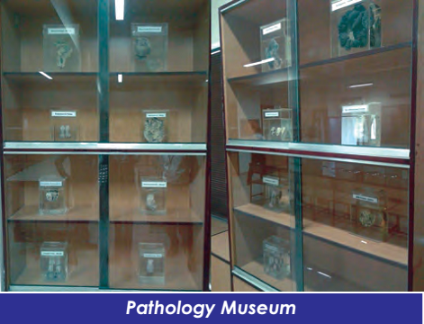 Pathology2